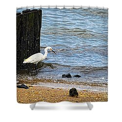 Snowy Egret At The Shore Shower Curtain