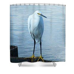 Shower Curtain featuring the photograph Snowy Egret by Lizi Beard-Ward