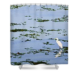 Snowy Egret Shower Curtain by Mike Robles