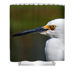 Snowy Egret Portrait Shower Curtain by Bob and Jan Shriner