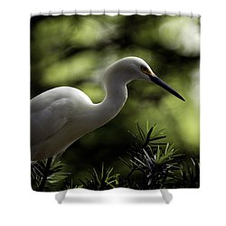 Shower Curtain featuring the photograph Snowy Egret by Travis Burgess