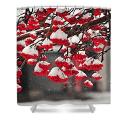 Shower Curtain featuring the photograph Snowy Mountain Ash Berries by Fran Riley