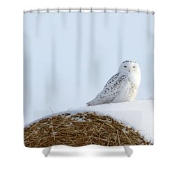 Shower Curtain featuring the photograph Snowy Owl by Alyce Taylor