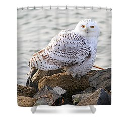 Snowy Owl In New Jersey Shower Curtain