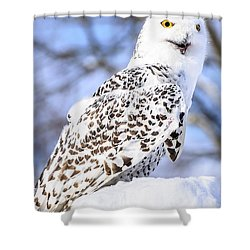 Snowy Owl Look Out Shower Curtain by LeeAnn McLaneGoetz McLaneGoetzStudioLLCcom