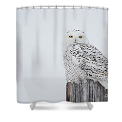 Snowy Owl Perfection Shower Curtain by Cheryl Baxter