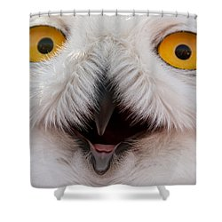 Snowy Owl Up Close And Personal Shower Curtain by Laura Duhaime