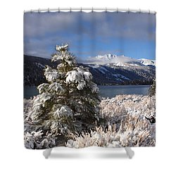 Snowy Pine  Shower Curtain by Duncan Selby