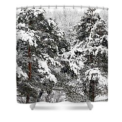 Snowy Pines Shower Curtain by Kathleen Struckle