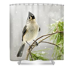 Snowy Songbird Shower Curtain by Christina Rollo