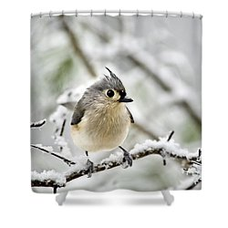 Snowy Tufted Titmouse Shower Curtain by Christina Rollo