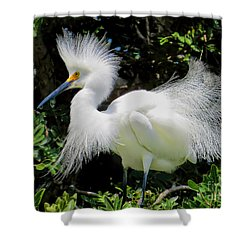 Snowy White Egret Breeding Plumage Shower Curtain by Jennie Breeze