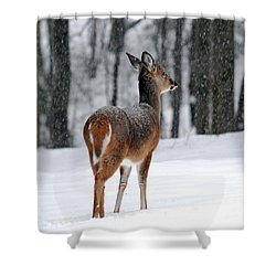 Snowy White Tail Shower Curtain by Christina Rollo
