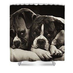 Snuggle Bug Boxer Dogs Shower Curtain by Stephanie McDowell