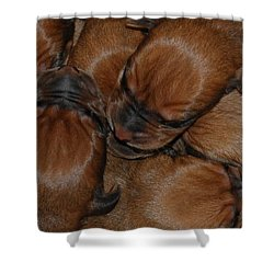 Shower Curtain featuring the photograph Snuggle by Mim White