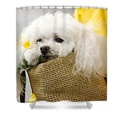 Snuggled Poodle Dog Shower Curtain by Donna Doherty