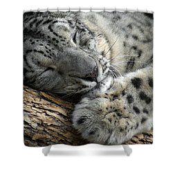 Snuggles Shower Curtain