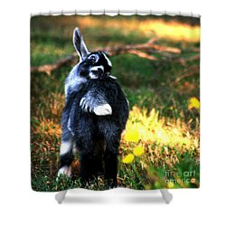 Shower Curtain featuring the photograph Snuggles by Lesa Fine