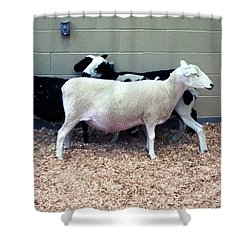 Snuggling Goats Shower Curtain