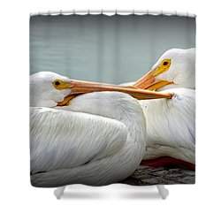Snuggly Pelicans Shower Curtain by Laurie Perry