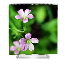 So Delicate In Purple. Texas Spring Perennial Shower Curtain