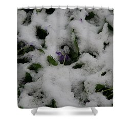 Shower Curtain featuring the photograph So Much For An Early Spring by David S Reynolds