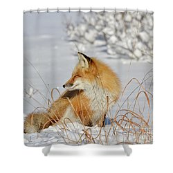 Soaking Up The Sun Shower Curtain by Sami Martin