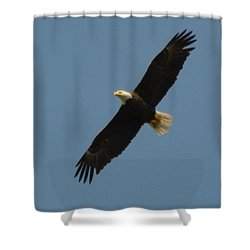Soaring Bald Eagle Shower Curtain by Jeff at JSJ Photography