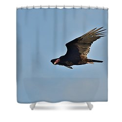 Shower Curtain featuring the photograph Soaring by David Porteus