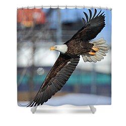 Shower Curtain featuring the photograph Soaring Eagle by Coby Cooper