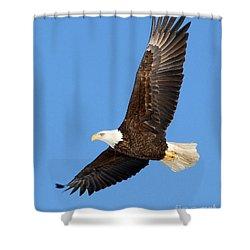 Soaring Eagle Shower Curtain