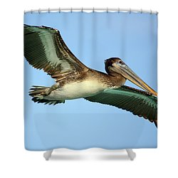 Shower Curtain featuring the photograph Soaring Pelican by Suzanne Stout