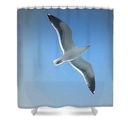 Soaring Seagull Shower Curtain