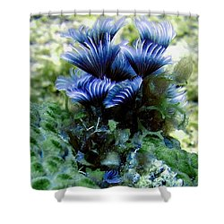 Social Feather Duster Cluster - A Social Gathering Shower Curtain by Amy McDaniel
