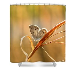 Soft Baby Blue Shower Curtain by Debbie Green