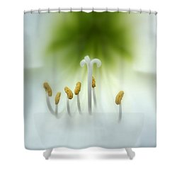 Soft Beauty Shower Curtain by Lynn Sprowl