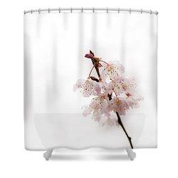 Soft Cherry Plum Shower Curtain by Anne Gilbert
