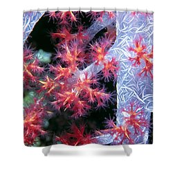 Soft Corals 18 Shower Curtain