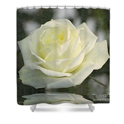 Soft Cream Rose Shower Curtain by Brian Roscorla