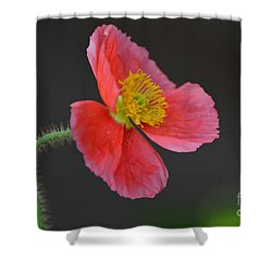 Soft Shower Curtain by Debby Pueschel