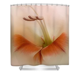 Soft Gladiolus Shower Curtain by Brian Roscorla