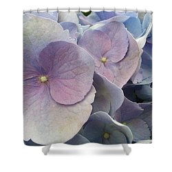 Shower Curtain featuring the photograph Soft Hydrangea  by Caryl J Bohn