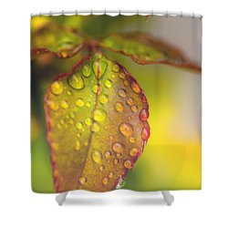 Soft Morning Rain Shower Curtain by Stephen Anderson
