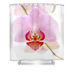 Soft Orchid Shower Curtain by Hannes Cmarits