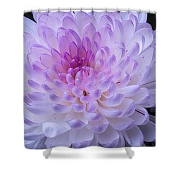 Soft Pink Mum Shower Curtain by Garry Gay