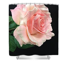 Shower Curtain featuring the photograph Soft Pink Rose 1 by Jeannie Rhode