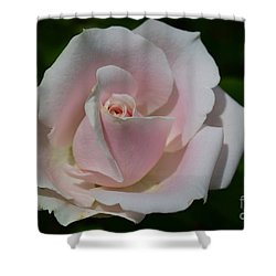 Shower Curtain featuring the photograph Soft Pink Rose by Jeannie Rhode