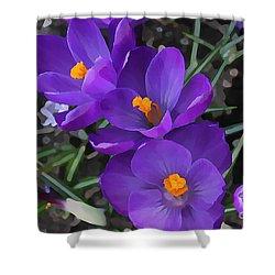 Shower Curtain featuring the photograph Soft Purple Crocus by Judy Palkimas