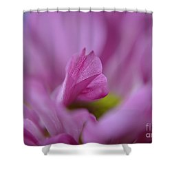 Soft Purple Shower Curtain by Michelle Meenawong