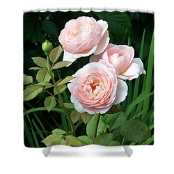 Soft Trio Shower Curtain